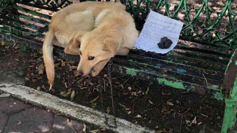 Menino abandona cachorro e escreve carta para salvá-lo de maus-tratos: 'Cuidem muito bem dele'