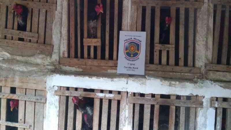 Dois homens são presos em Bodocó (PE) suspeitos de maus-tratos a animais