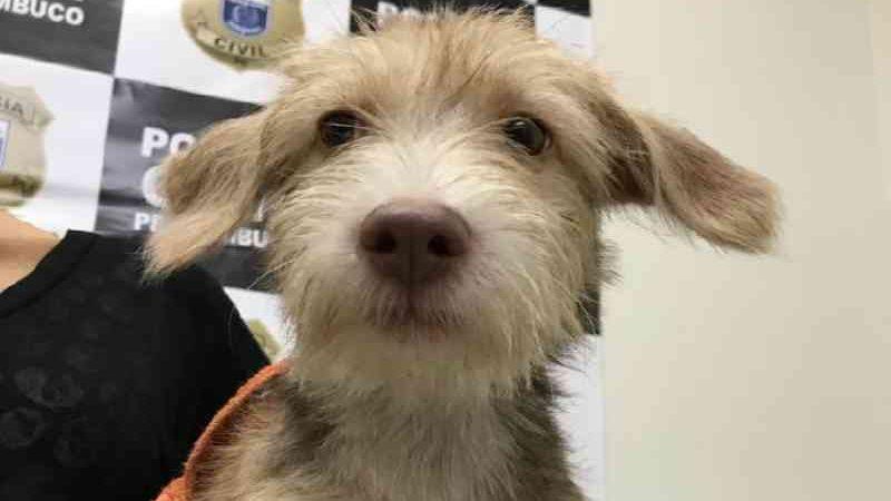 Autor de maus-tratos contra cadela em Ipojuca (PE) responderá pelo crime em liberdade
