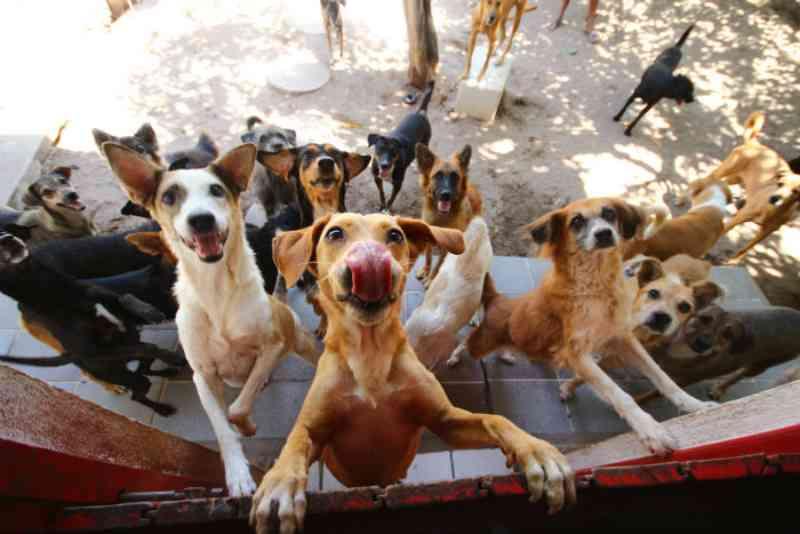 Prefeitura de Jaboatão inaugura primeira Unidade Básica de Saúde PET de Pernambuco