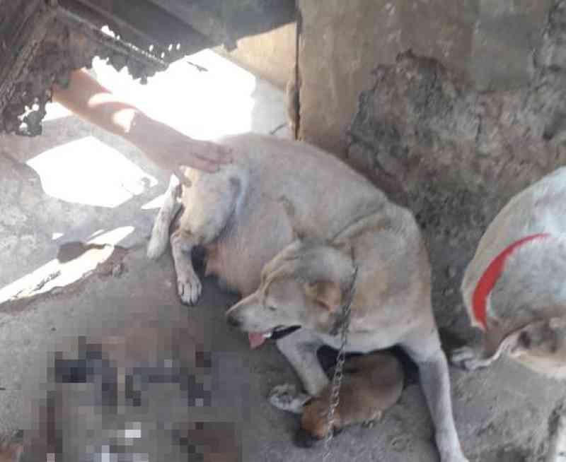 Laudo indica que filhotes de cachorro morreram por calor extremo em Teresina (PI); mulher é indiciada