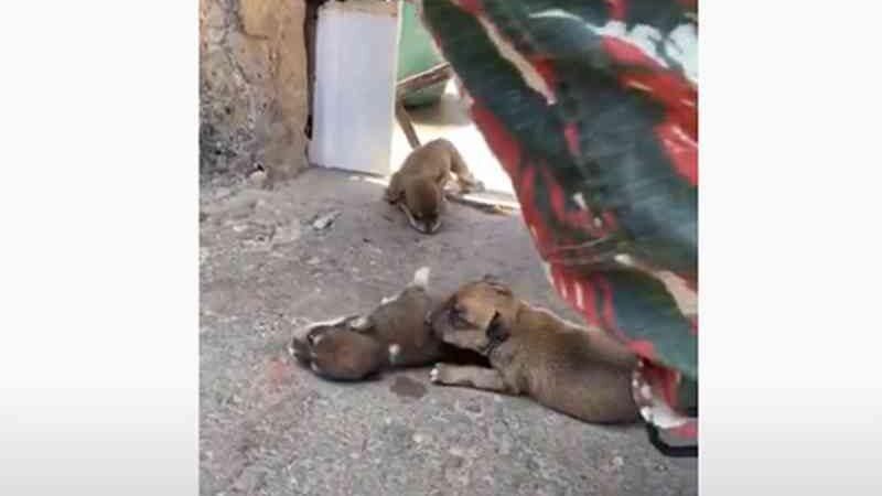 Polícia cumpre mandado e prende suspeita em morte de sete cachorrinhos deixados ao sol no PI