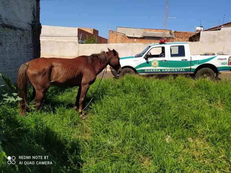 GDA resgata cavalo em situação de maus-tratos no Jardim Interlagos, em Arapongas, PR