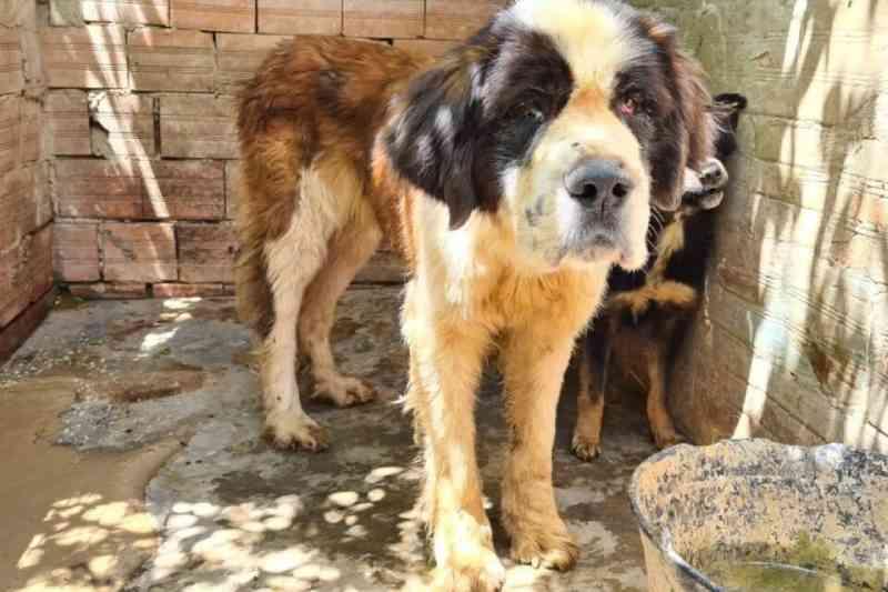 Homem é preso por maus-tratos e cães com anemia e ferimentos são resgatados em Campo Largo, PR