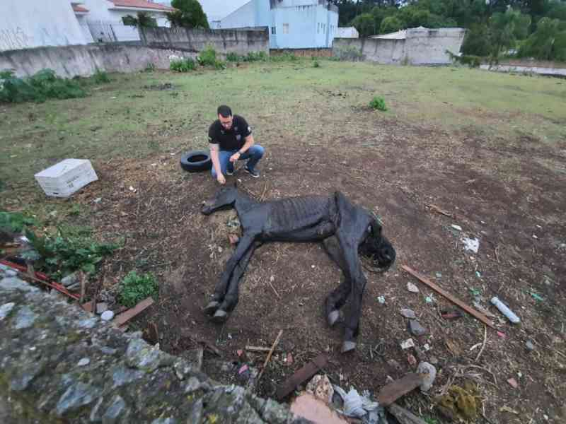 Égua é abandonada em quadro de desnutrição em terreno de Curitiba, PR