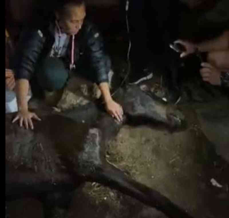 Morre égua abandonada em terreno no bairro Portão, em Curitiba, PR