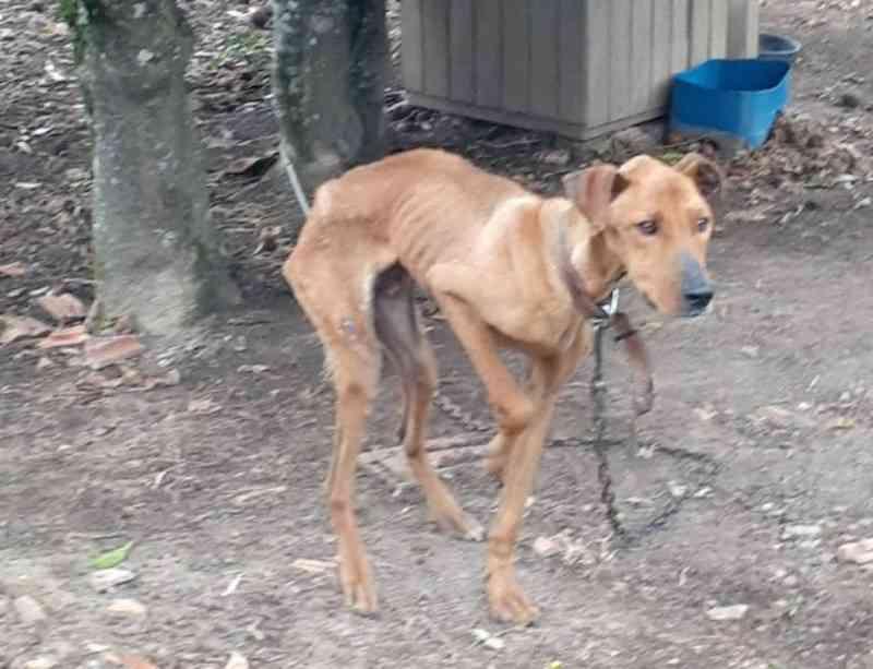 Mulher é presa suspeita de maus-tratos após policiais encontrarem cachorros desnutridos em chácara, em Imbituva, PR