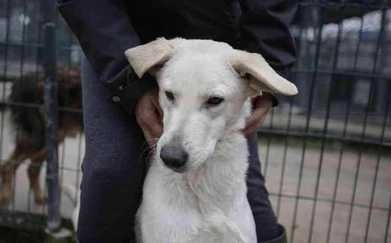 GNR resgata 43 animais por suspeitas de maus-tratos em Setúbal, Portugal