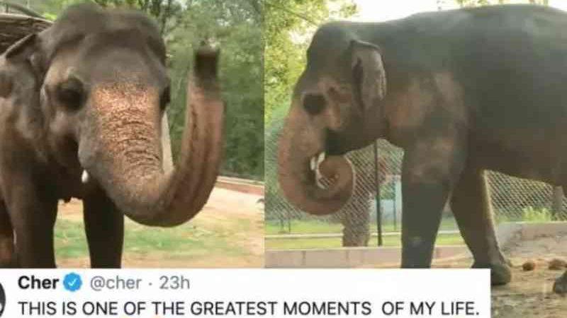 Atriz Cher comemora fim de suplício de elefante no Paquistão: animal ganhou festa