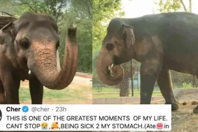 Cantora Cher comemora fim de suplício de elefante no Paquistão: animal ganhou festa