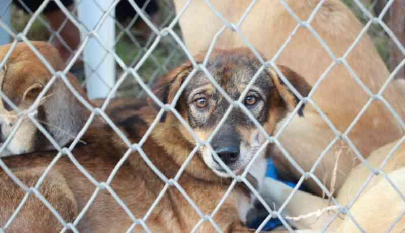 Portugal: Dona de canil acusada de maus tratos mantém 100 animais noutro terreno
