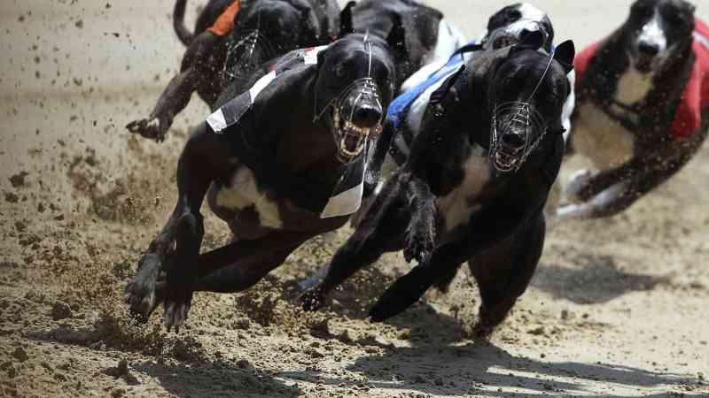 Proibição das corridas de cães volta a ser discutida no Parlamento de Portugal