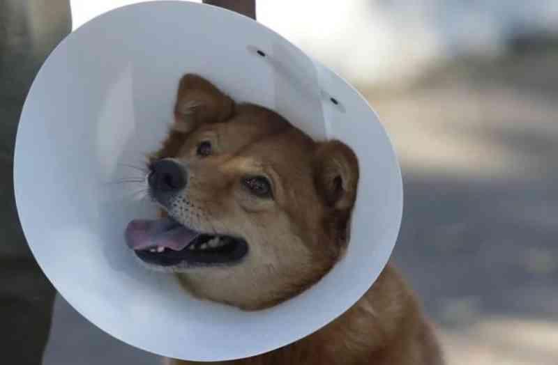 Mais de 6 mil vagas para castração gratuita de cães e gatos serão oferecidas em dezembro no Rio