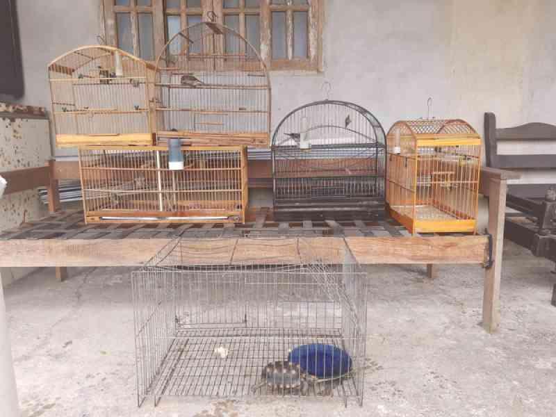 Oito animais silvestres são apreendidos pela polícia ambiental em Maricá, no RJ