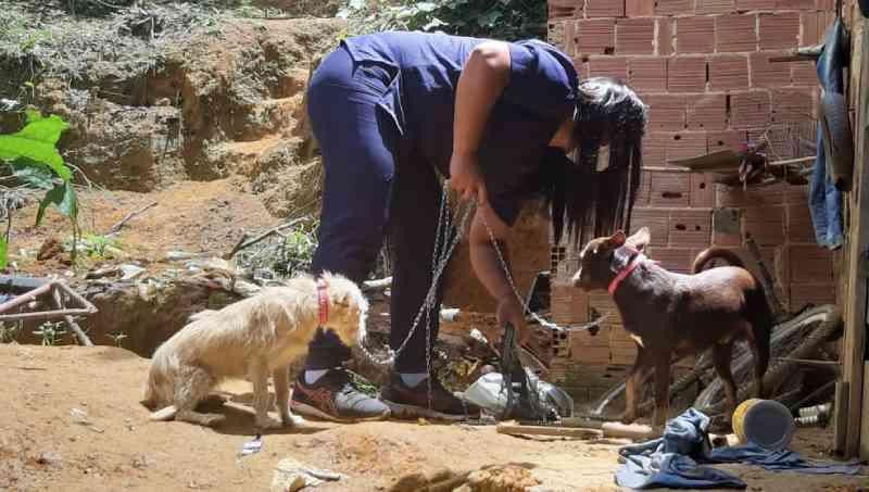 Mulher é detida em flagrante por maus-tratos a animais em Mendes, RJ