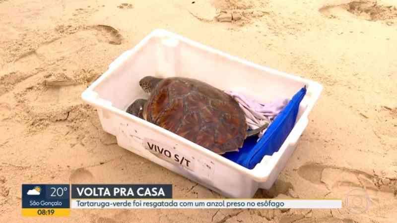 Tartaruga-verde resgatada com anzol preso no esôfago é solta na Praia de Itaipu, em Niterói (RJ), após reabilitação