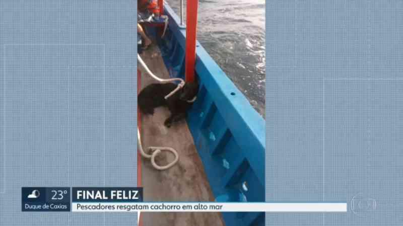 Cão reencontra o tutor após ser resgatado em alto mar no Rio