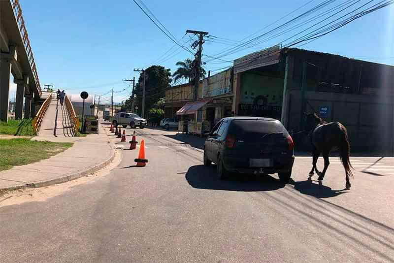 Cavalo é forçado a percorrer rodovia Niterói-Manilha enquanto tutores estão dentro de carro