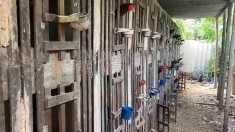 PM e Inea encontram rinha de galo e mais de 80 animais feridos em operação em área de milícia no Rio
