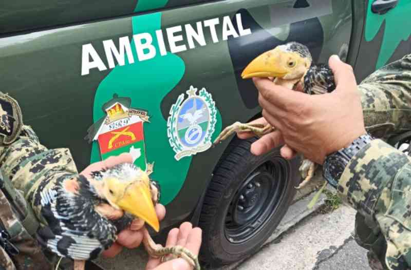 PM prende sete pessoas em ação contra o tráfico de animais silvestres no Rio