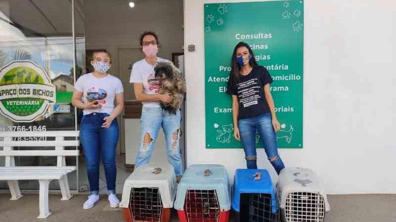 Polícia Civil e APAB recolhem animais em situação 'degradante' em Bom Retiro do Sul, RS