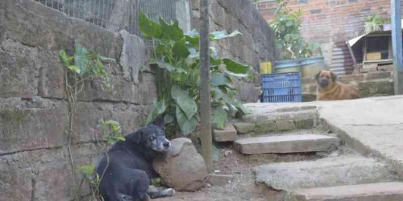 Moradora denuncia que animais foram envenenados no Porto Blos, em Campo Bom, RS