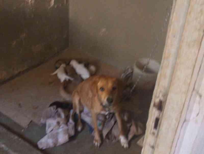 Mulher é presa em Canoas (RS) por maus-tratos a quase 30 animais
