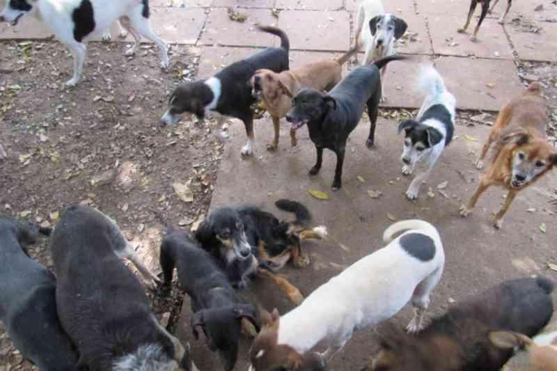 Abandono de cães continua nas proximidades do Abrigo São Francisco de Assis, em Santa Cruz do Sul, RS