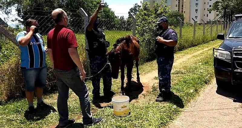 Cavalo maltratado é abandonado em importante via de São Leopoldo, RS