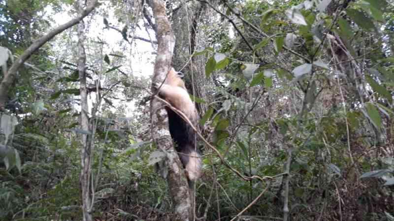 Animais são resgatados e devolvidos à natureza na região norte do RS