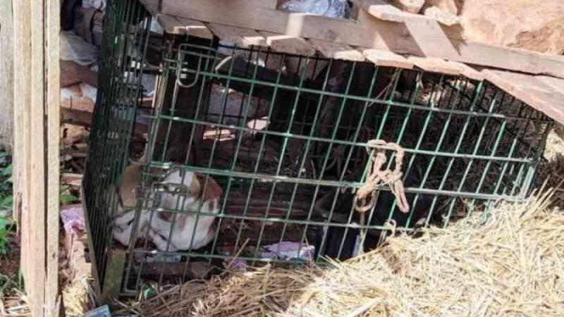 Homem que mantinha cães em 'situação de extrema crueldade' é preso em cidade gaúcha