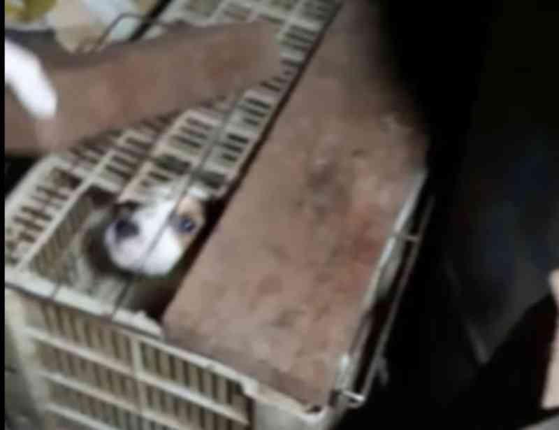 Polícia apreende 12 cães, coelho e 43 aves em condições de maus-tratos, em Bom Princípio, RS