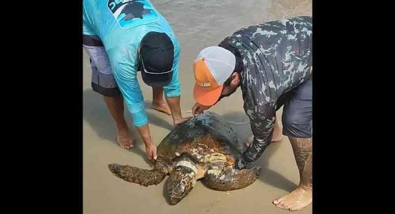 Vídeo: tartaruga-marinha é resgatada com ferimentos em Balneário Camboriú, SC
