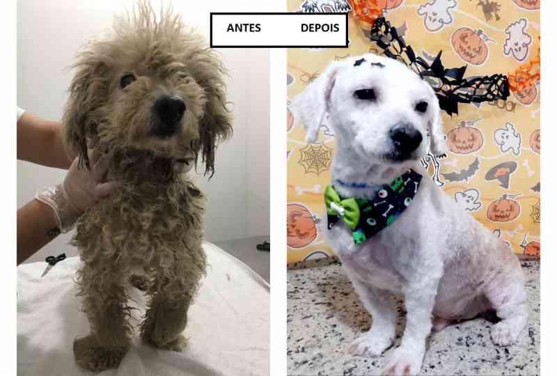 Cão é encontrado com cortes pelo corpo em Biguaçu, SC