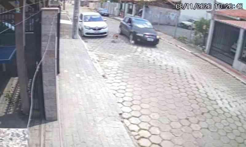 Carro atropelou e matou cachorro na Murta, em Itajaí, SC