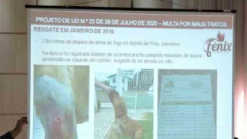 Prefeito de São Lourenço do Oeste (SC) retira projeto que previa multa para maus-tratos a animais