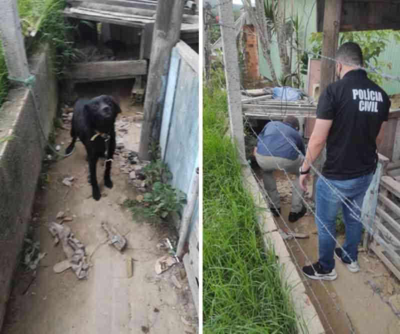 Polícia Civil resgata cão com sinais de maus-tratos em Turvo, SC