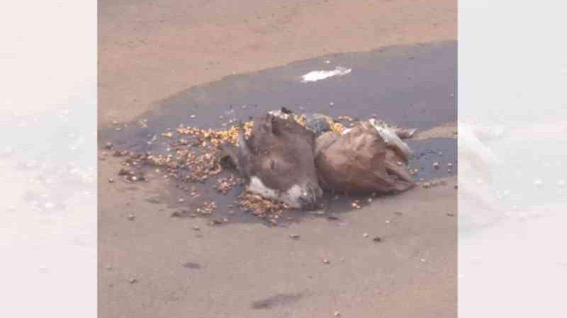 Animais são mortos para possível ritual, em Xanxerê, SC