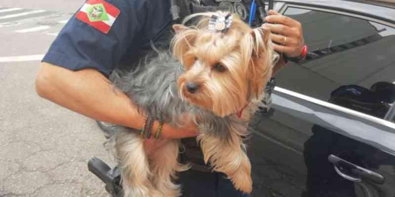 Homem é detido por maus-tratos após deixar cachorro trancado dentro de veículo em SC