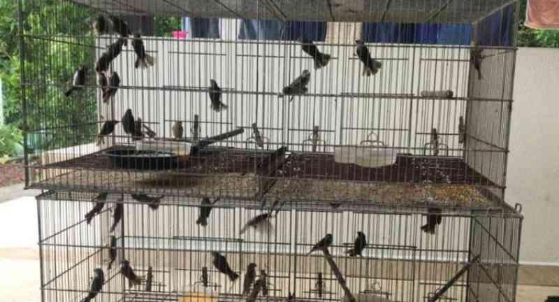 Tráfico de animais silvestres em SC motiva operação da polícia em 11 cidades do Estado