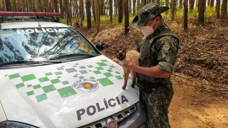 Mulher é presa e multada após abandonar gato às margens de rodovia em Coronel Macedo, SP