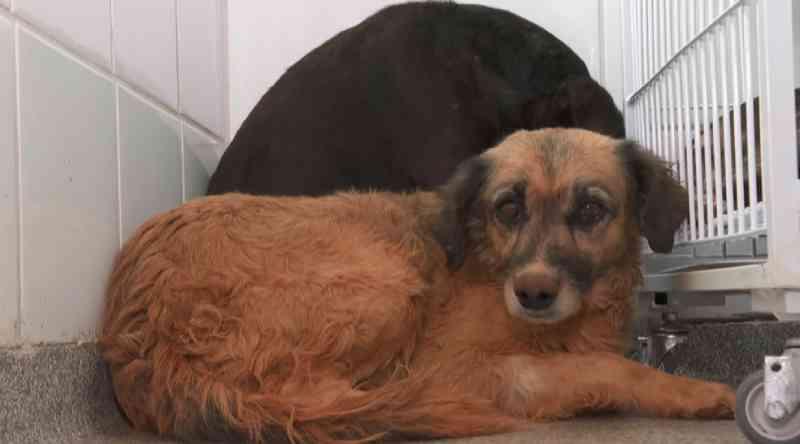 Após tratamento para sarna, cães resgatados de casa em Franca, SP, deverão ir para adoção