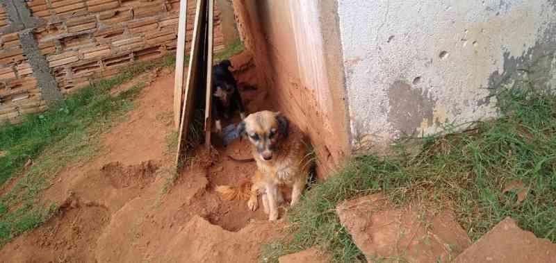 Oito cães são resgatados em situação de maus-tratos em casa no Jardim Aeroporto, em Franca, SP