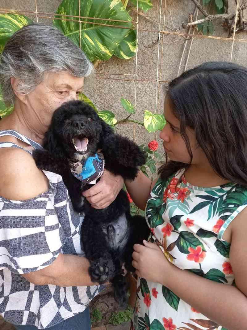 Cão resgatado após ser amarrado em sacola e jogado dentro de bueiro ganha novo lar