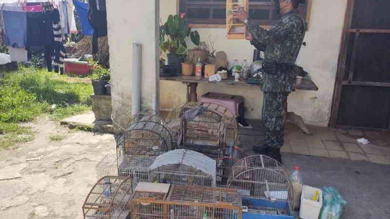 Polícia Ambiental multa homem em R$ 27 mil por manter aves em cativeiro em Itanhaém, SP