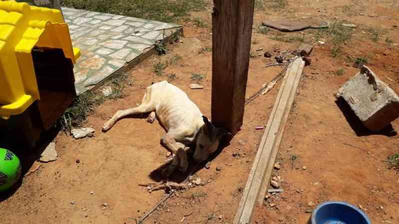 Polícia encontra cão preso com corrente debaixo do sol sem água e sem comida em Jundiaí, SP