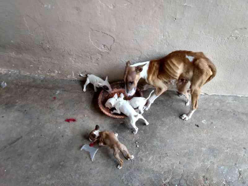 Moradores se mudam e seis cachorros são resgatados em situação de abandono em casa de Limeira, SP