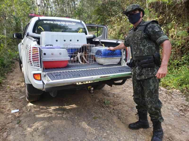 Polícia Ambiental resgata 50 animais sem água e alimentação em Miracatu, SP