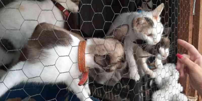 Em Mogi Mirim (SP) PM Ambiental resgata 11 gatos que eram deixados em viveiro