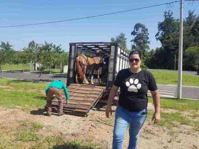 Cavalo debilitado e vítima de maus-tratos é resgatado em Piracicaba, SP